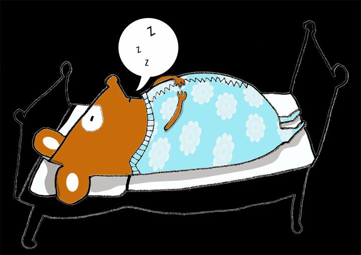 Hamstern är ett nattdjur!