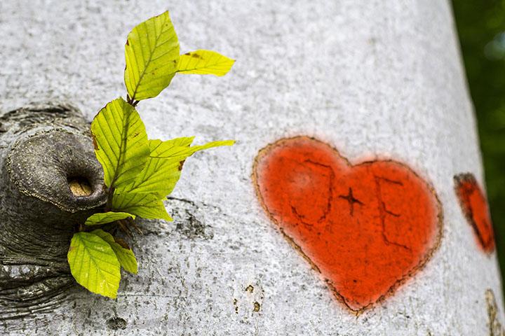 Alla Hjärtans dag  i skogen!