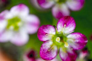 Blommor Överallt - Snart