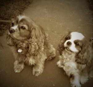 Jag träffa Världens sötaste hundar. Matte och husse va lika underbara. Det kanske smittar!