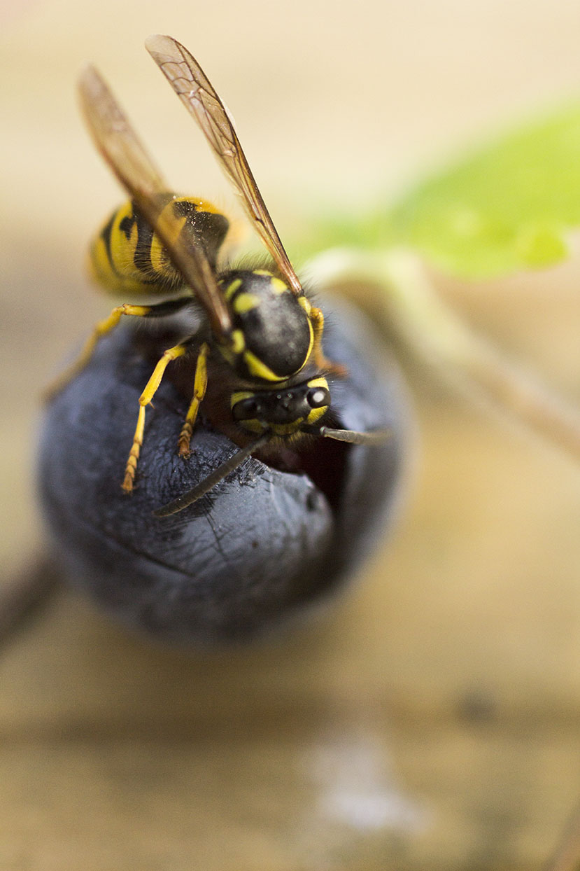 Wasp 3