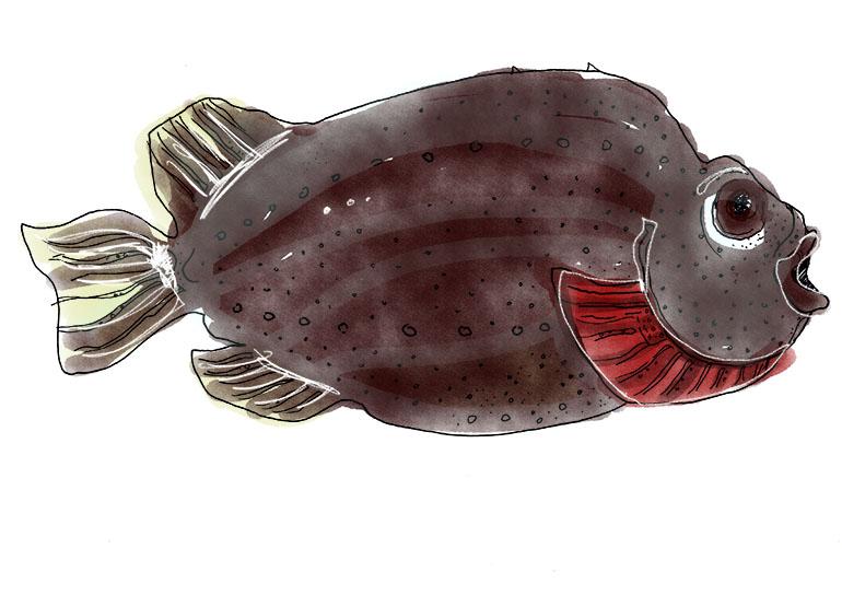 TUSCH FISK